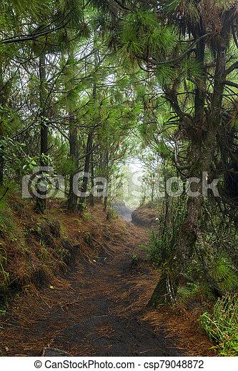 Acatenango Guatemala Hiking Trail - csp79048872