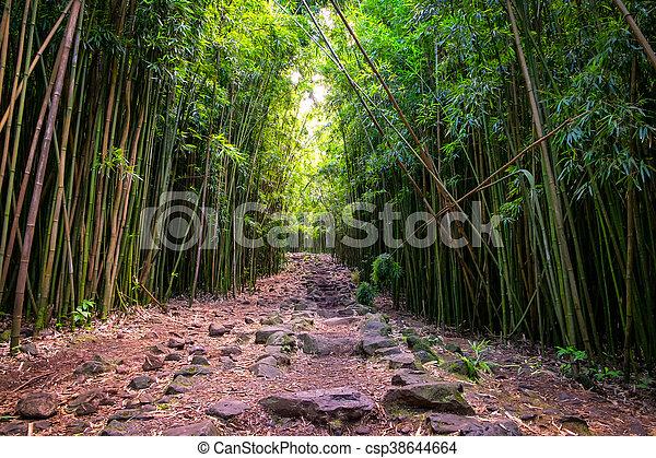 accidentato, percorso, foresta, maui, bambù, paesaggio, vista - csp38644664