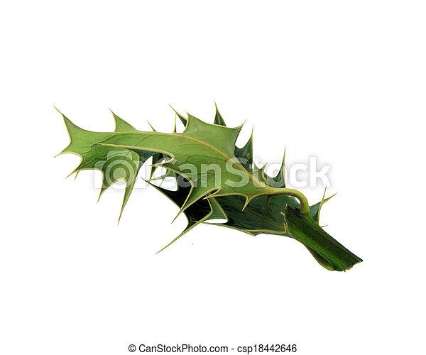 Holly - csp18442646