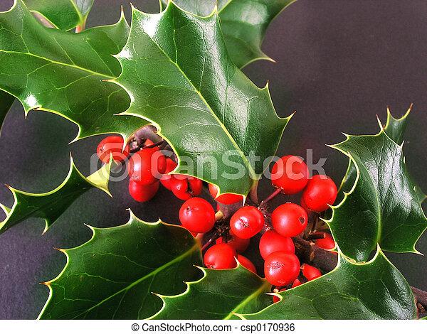 Holly - csp0170936