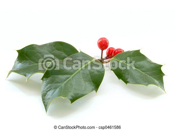 Holly - csp0461586