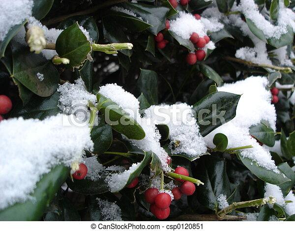La santidad navideña - csp0120851