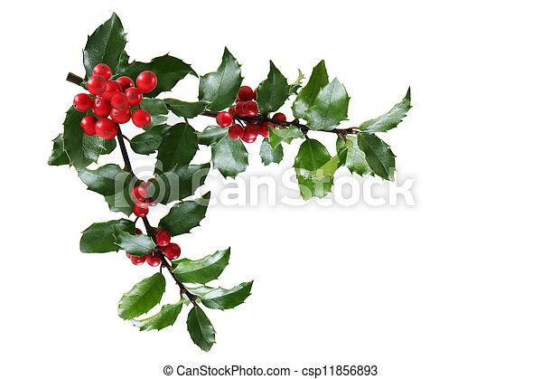 Holly Branch - csp11856893