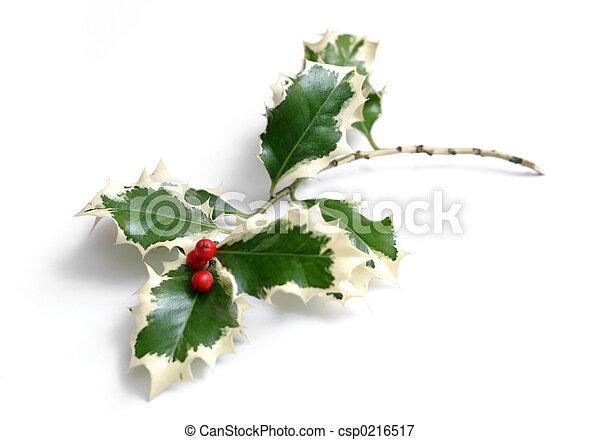 Holly - csp0216517