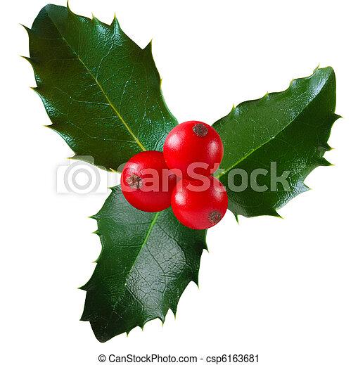Holly - csp6163681