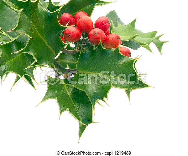 Holly - csp11219489