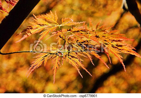 Acer palmatum 02 - csp6779901