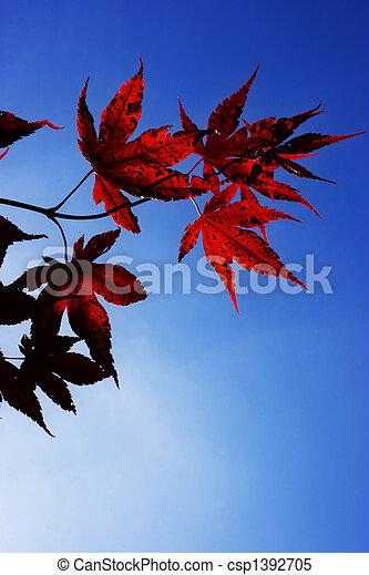 Acer Palmatum - csp1392705
