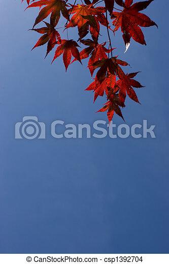 Acer Palmatum - csp1392704