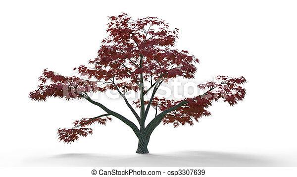 Acer palmatum - csp3307639