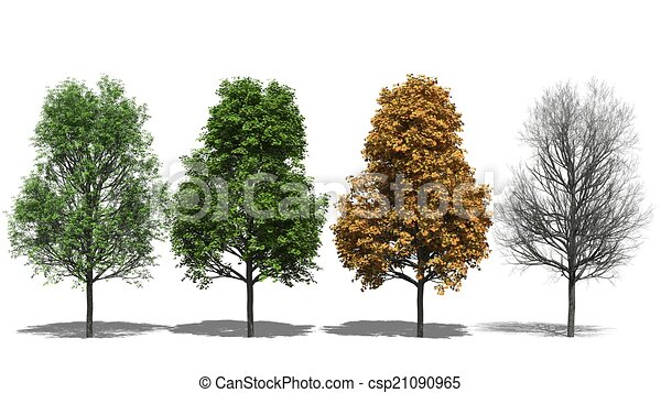 Acer Platanoides Four Seasons 3d Computer Rendered Illustration