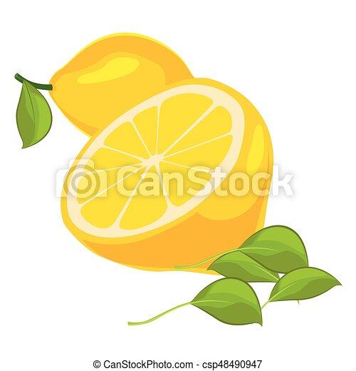 achtergrond, bladeren, vrijstaand, citroenen, fris, witte  - csp48490947