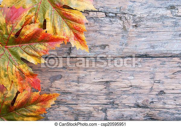 achtergrond, herfst - csp20595951