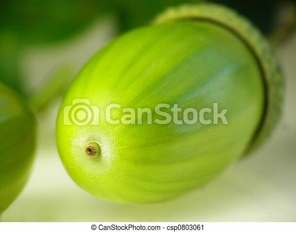 acorn seeds - csp0803061