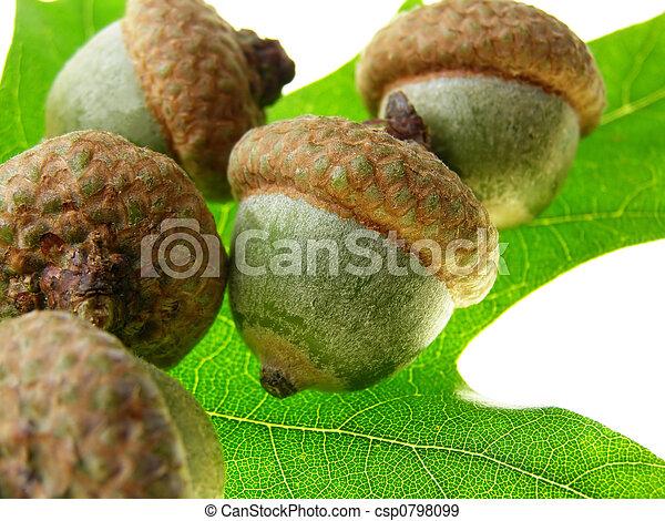 acorn seeds - csp0798099