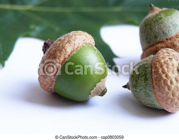 acorn seeds - csp0803059