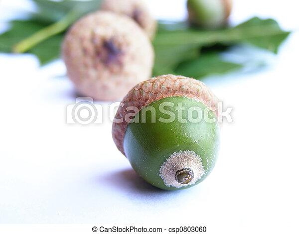 acorn seeds - csp0803060