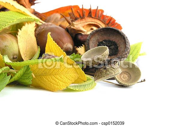 acorn - csp0152039