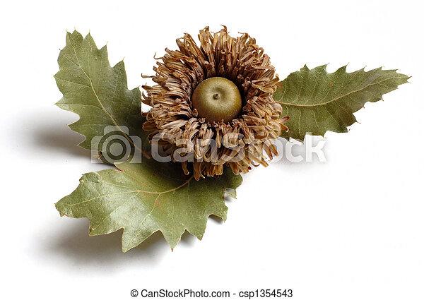acorn - csp1354543