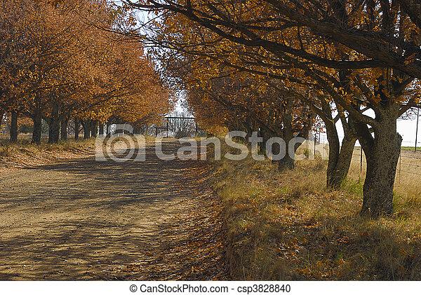 Acorn tree lane - csp3828840