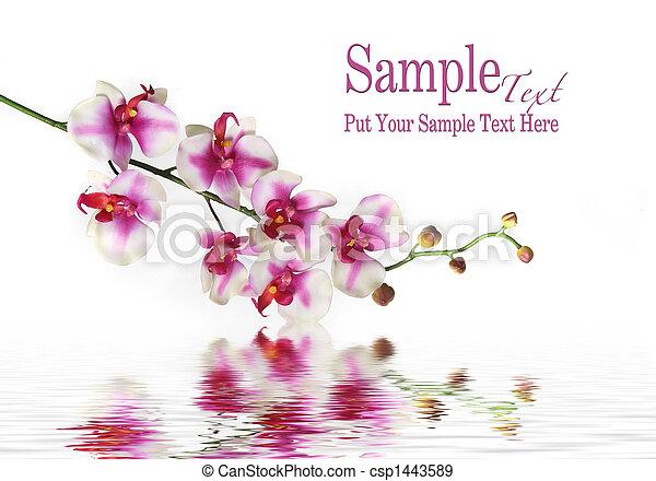 acqua, singolo fiore, gambo orchidea - csp1443589