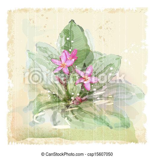 Acquarello frangipani fiore style plumeria vettore for Piani domestici in stile hawaiano