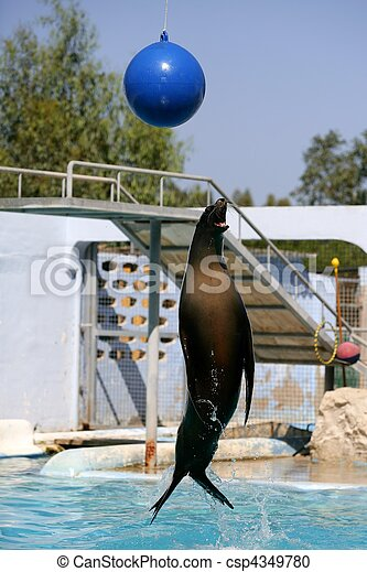 Acrobatic seal jump on a water show trying  get the ball - csp4349780