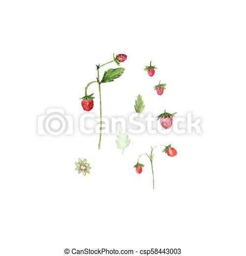 Una ilustración acuática de fresas aisladas en blanco - csp58443003