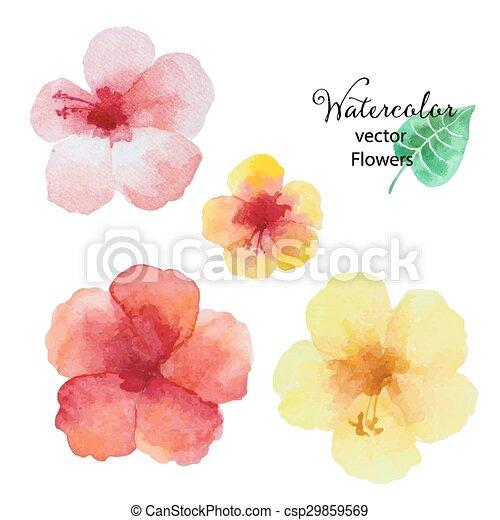 Acuarela Hibisco Flowers Conjunto Hibisco Conjunto