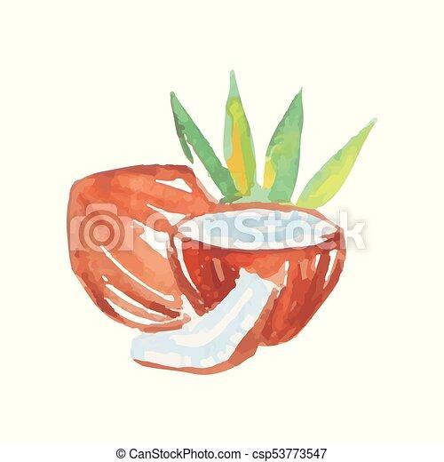 acuarela, producto, natural, colorido, roto, árboles., fruit., verde, ilustración, mano, tropical, mitades, vector, palma, dibujado, cocos, painting., leche entera, design. - csp53773547