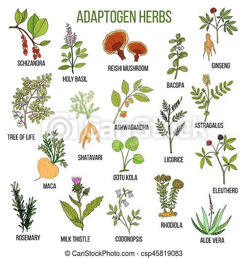 Adaptogen herbs. Hand drawn set of medicinal plants - csp45819083