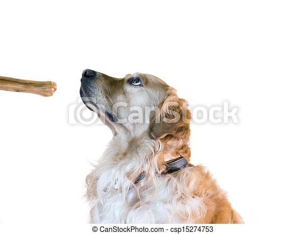 addestramento, cane - csp15274753