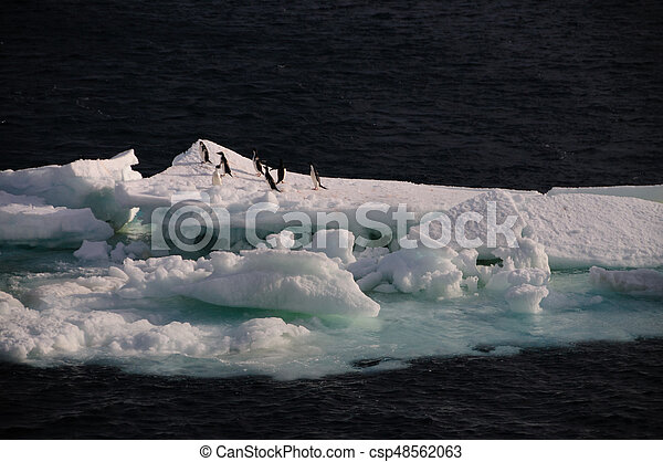 Adelie Penguins on an ice shelf in the Weddell Sea - csp48562063