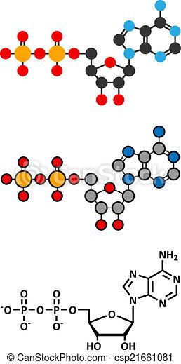 Adenosine Diphosphate Adp Molecule Plays Essential Role In Energy
