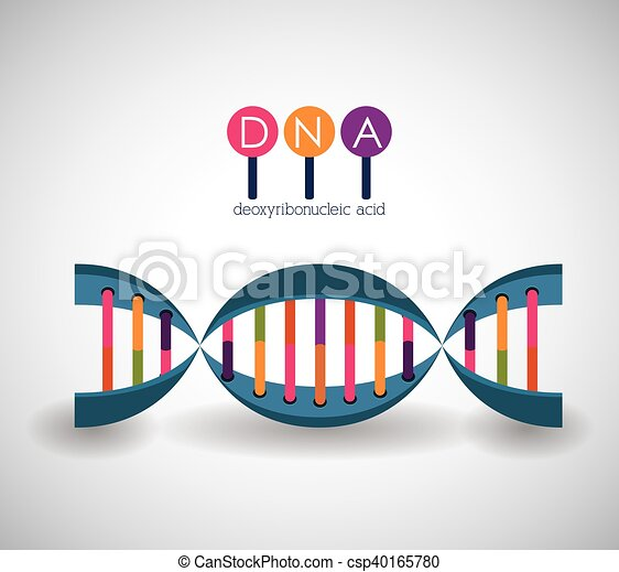 Adn Diseño Estructura Cromosoma