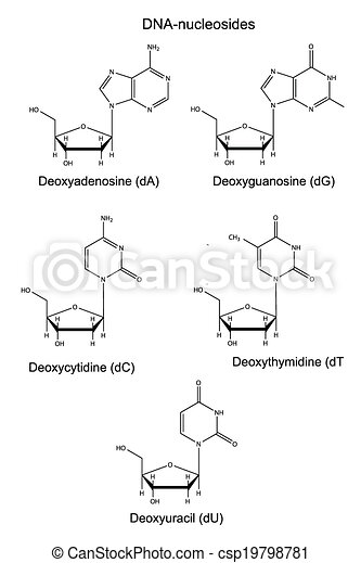 adn, nucleosides - csp19798781