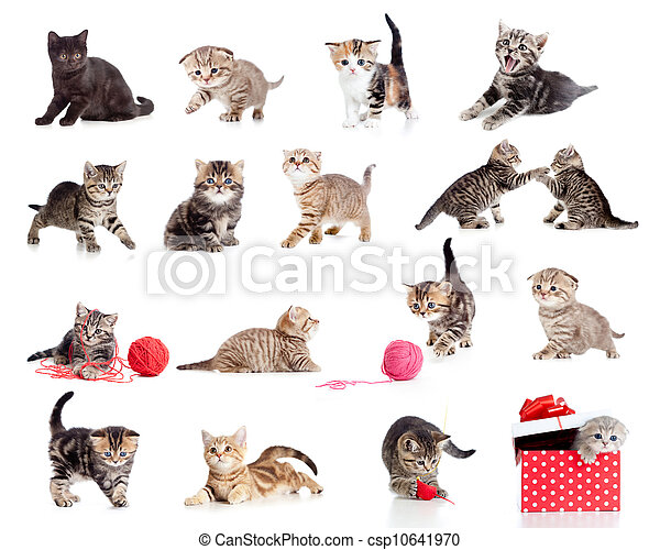 Adorable kittens collection. Little funny cats isolated on white. - csp10641970