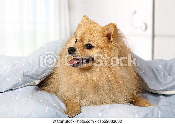 Adorable pet at home - csp59083632