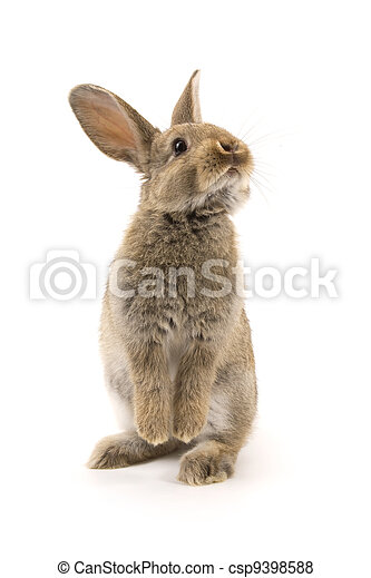 Adorable rabbit isolated on white - csp9398588