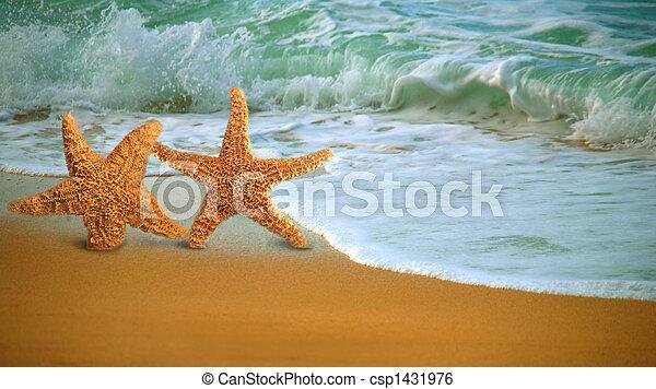 Adorable Star Fish Walking Along the Beach - csp1431976