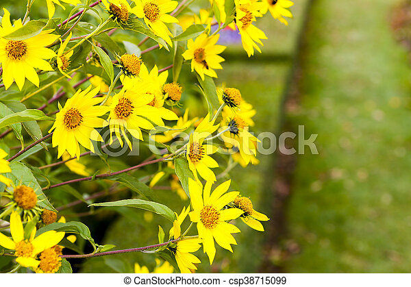 Adorable yellow flowers in a meadow - csp38715099