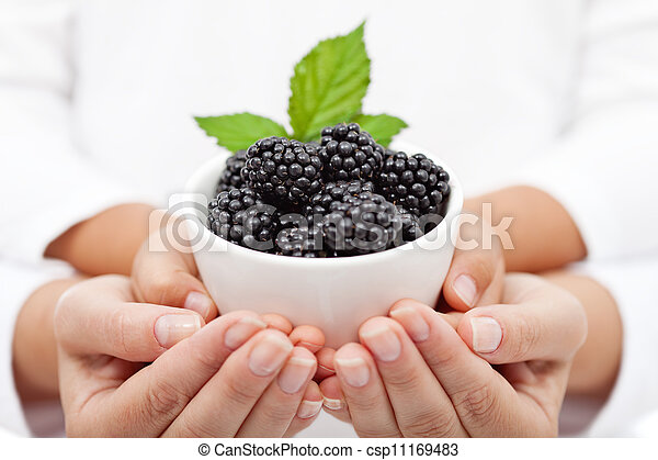 Adult and child hands holding blackberries in a bowl - csp11169483