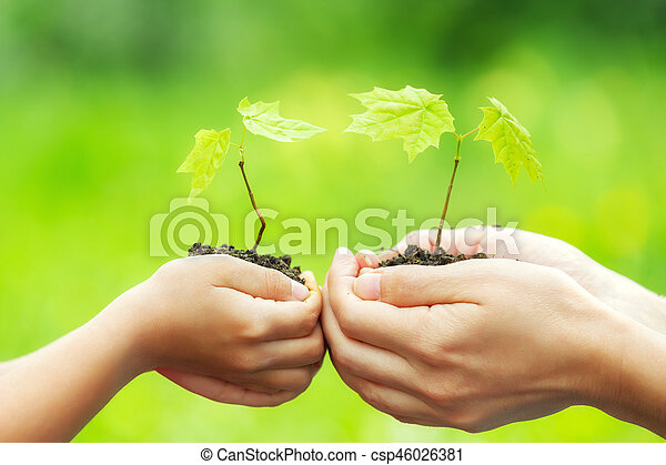 Adult and child holding little green plant in hands - csp46026381