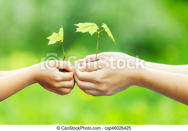 Adult and child holding little green plant in hands - csp46026425