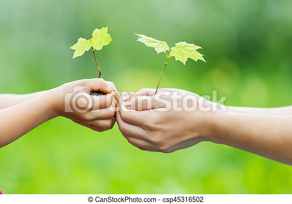 Adult and child holding little green plant in hands - csp45316502
