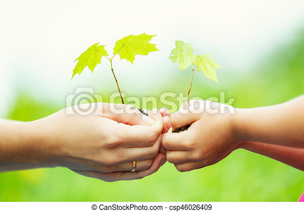 Adult and child holding little green plant in hands - csp46026409