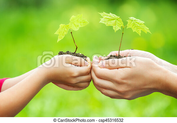 Adult and child holding little green plant in hands - csp45316532