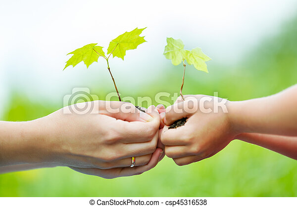 Adult and child holding little green plant in hands - csp45316538