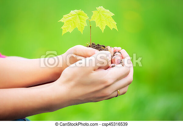 Adult and child holding little green plant in hands - csp45316539