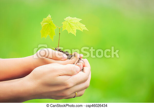 Adult and child holding little green plant in hands - csp46026434